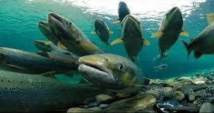 Amoskeag-Fishways-aquarium