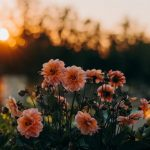 Airline Tickets: Military Discount To USA & Check Out the Wildflowers